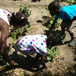 kids picking veggies
